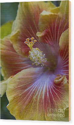 Tropical Hibiscus - Maui Hawaii Wood Print by Sharon Mau