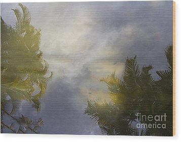 Tropical Reflections Wood Print by Anne Rodkin