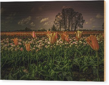 Tulip Festival Wood Print by Jean-Jacques Thebault