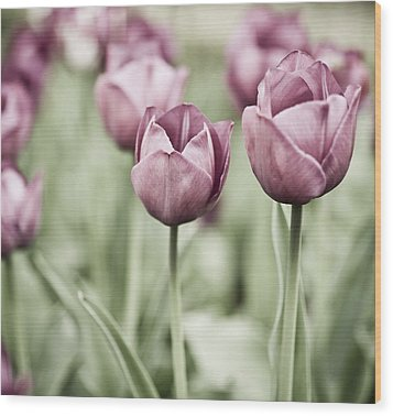 Tulip Garden Wood Print by Frank Tschakert