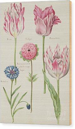 Tulips Wood Print by Nicolas Robert