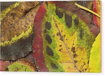 Turning Leaves Wood Print by Stephen Anderson