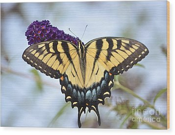 Two  Tailed Swallowtail Wood Print by Kathy Gibbons