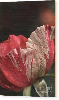 Two Toned Rose Wood Print by Joy Watson