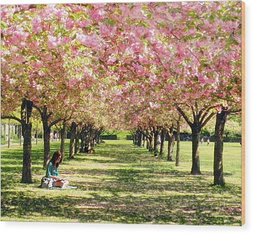 Wood Print featuring the photograph Under The Cherry Blossom Trees by Nina Bradica