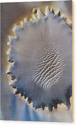Victoria Crater Wood Print by Patricia Januszkiewicz