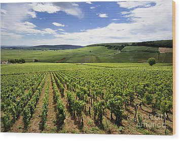 Vineyard Of Cotes De Beaune. Cote D'or. Burgundy. France. Europe Wood Print by Bernard Jaubert