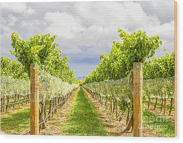 Vineyard Wood Print by Patricia Hofmeester
