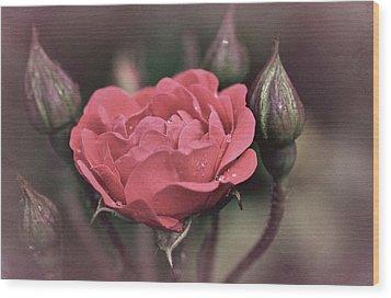 Vintage Rose No. 4 Wood Print by Richard Cummings