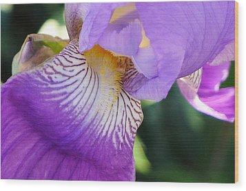 Violet Wood Print by Nora Boghossian