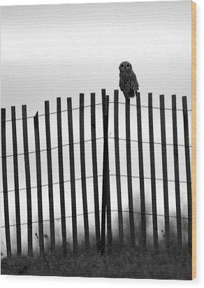 Waiting Owl Wood Print