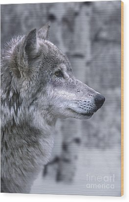 Watching And Waiting Wood Print by Sandra Bronstein