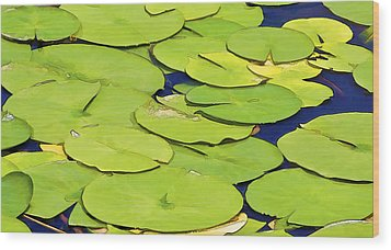 Water Lilly Wood Print by David Letts
