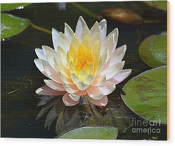 Wood Print featuring the photograph Water Lily by Lisa L Silva