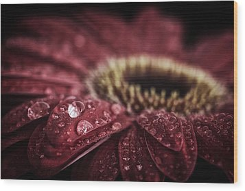 Waterdrops On A Gerbera Daisy Wood Print