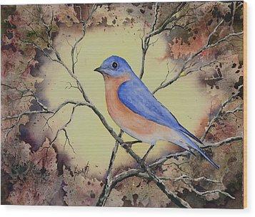 Western Bluebird Wood Print by Sam Sidders
