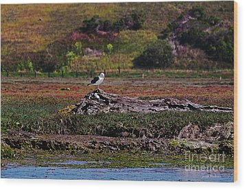 Western Gulls Nesting In A Log Wood Print by Susan Wiedmann