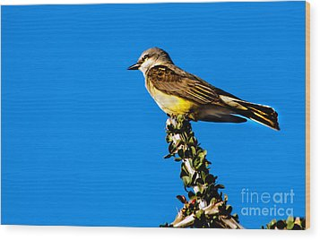 Western Kingbird Wood Print by Robert Bales