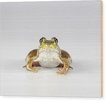 Wood Print featuring the photograph What You Looking At? by John Crothers