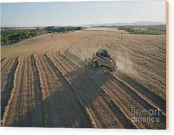 Wheat Harvest In Provence Wood Print by Sami Sarkis