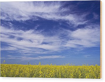 Where Land Meets Sky Wood Print by Keith Armstrong