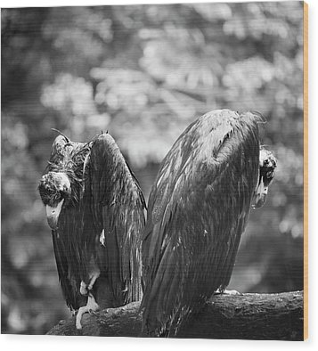 White-backed Vultures In The Rain Wood Print by Pan Xunbin