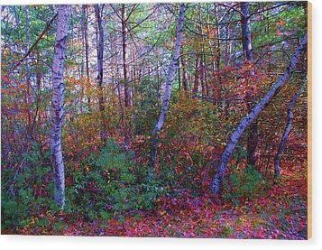 White Birch - Pocono Mountains Wood Print