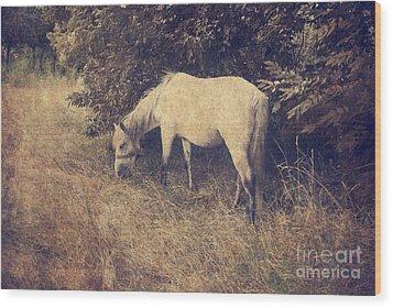 White Horse Wood Print by Jelena Jovanovic