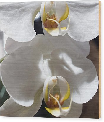 White Orchids Wood Print by Barbara Middleton