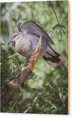 Wood Print featuring the photograph White-winged Dove by Beverly Parks