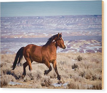 Eagle - Wild Horse Stallion Wood Print by Nadja Rider