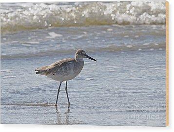 Willet Bird Wading In Ocean Surf Wood Print