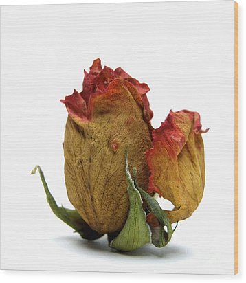 Wilted Rose Wood Print by Bernard Jaubert