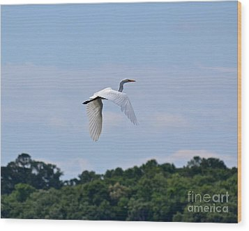 Wood Print featuring the photograph Wings II by Carol  Bradley