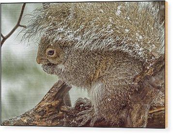Winter Squirrel Wood Print by LeeAnn McLaneGoetz McLaneGoetzStudioLLCcom