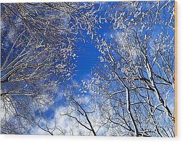 Winter Trees And Blue Sky Wood Print by Elena Elisseeva