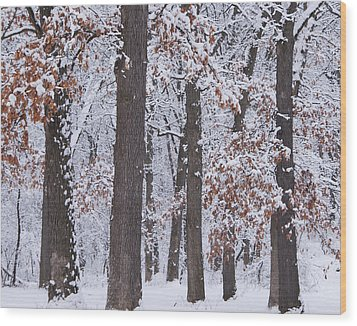 Winter Trees Wood Print by Larry Bohlin