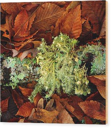 Wolf Moss Lichen Wood Print by Frank Winters