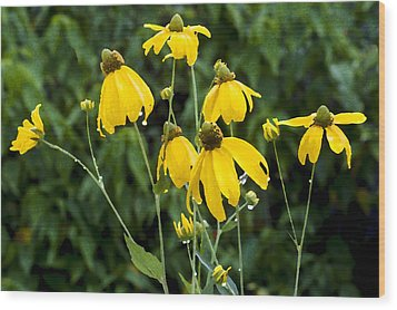 Yellow Cone Flowers Rudbeckia Wood Print by Rich Franco