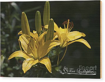 Wood Print featuring the photograph Yellow Day Lily 20120615_43a by Tina Hopkins