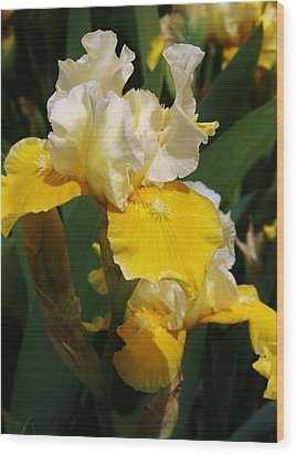 Yellow Delight Wood Print by Bruce Bley