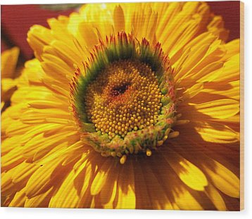 Yellow Flower Wood Print by Joyce Woodhouse