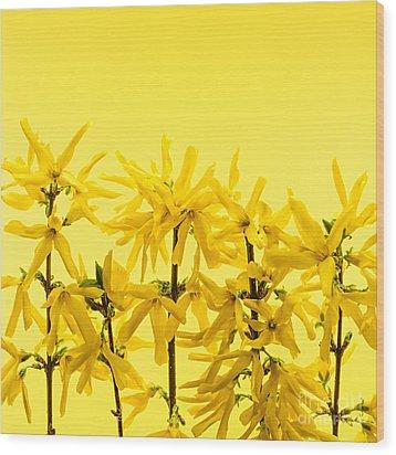 Yellow Forsythia Flowers Wood Print by Elena Elisseeva