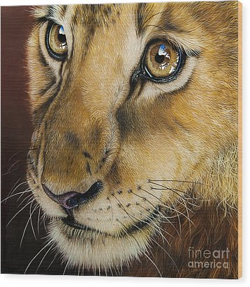 Young Lion Wood Print by Jurek Zamoyski