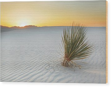 Yucca Plant At White Sands Wood Print by Alan Vance Ley