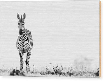 Zebra Facing Forward Washed Out Sky Bw Wood Print by Mike Gaudaur
