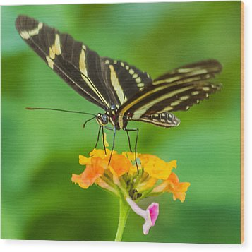 Wood Print featuring the photograph Zebra Longwing by Jane Luxton