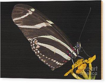 Zebra Longwing Wood Print