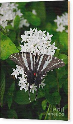 Zebra Swallowtail Wood Print by Angela DeFrias