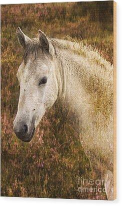 New Forest Pony Wood Print by Angel  Tarantella